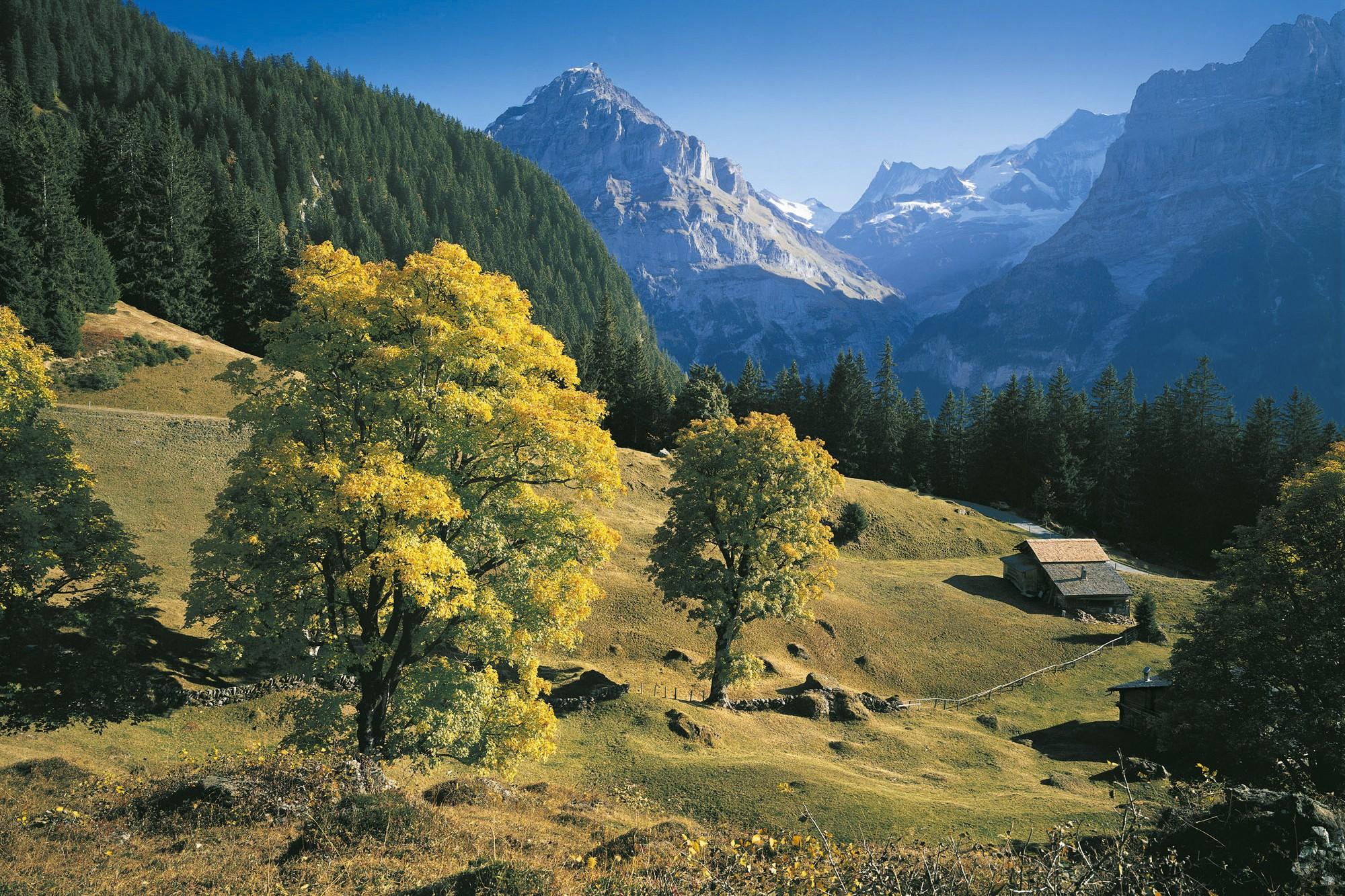 Bergahornweide Reichenbachtal