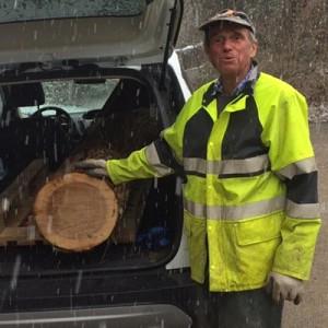 Abholung des Zürcher Ulmenholzes