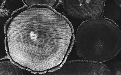 Wanderausstellung «Wald-Förster-Arbeit»