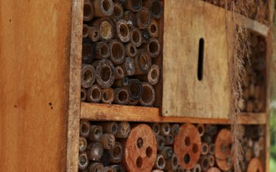 Kindernachmittag «Insektenhotel bauen»